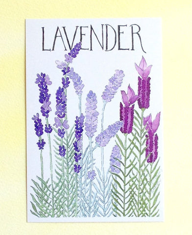 Watercolor Lavender Postcards
