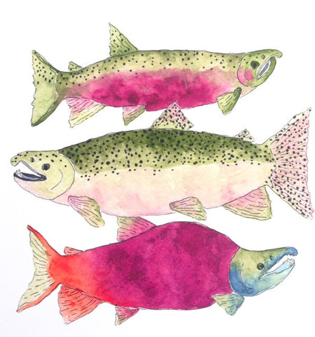 Salmon Kitchen Art Print
