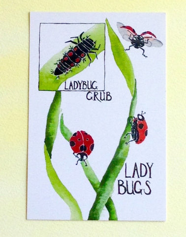 Watercolor Ladybug Postcards, poem on back, 4 in x 6 in, silky smooth card stock, birthday gardener gift