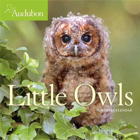 Little Owls Audubon 2020 Mini Calendar Front Cover