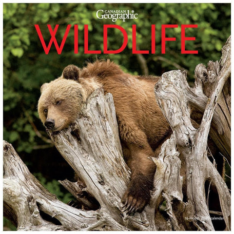 Can Geo Wildlife 2020 Wall Calendar Front Cover