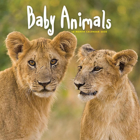 Baby Animals 2020 Wall CalendarFront Cover
