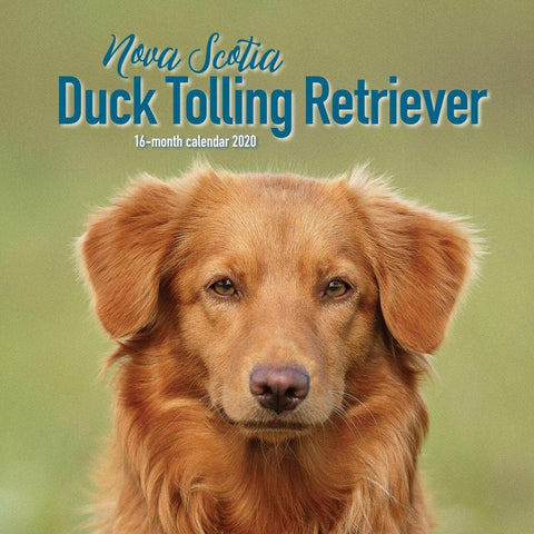 Nova Scotia Duck Tolling Terrier 2020 Wall CalendarFront Cover