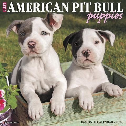American Pit Bull Terrier Puppies Just 2020 Wall Calendar Front Cover