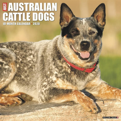 Just Australian Cattle Dogs 2020 Wall Calendar Front Cover
