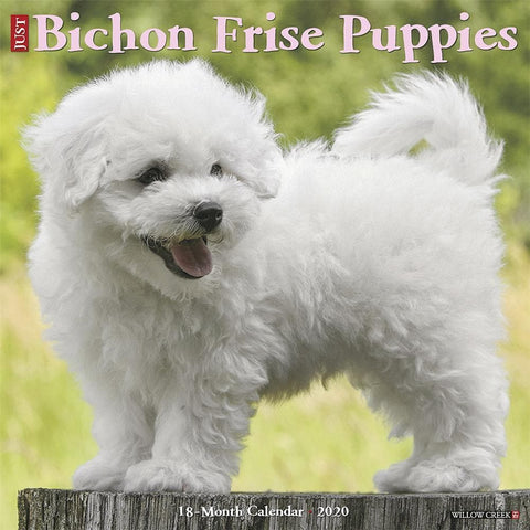 Just Bichon Frise Puppies 2020 Wall Calendar Front Cover