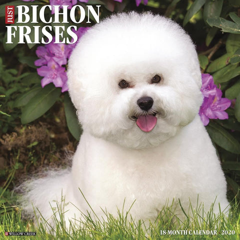 Just Bichons Frises 2020 Wall Calendar Front Cover