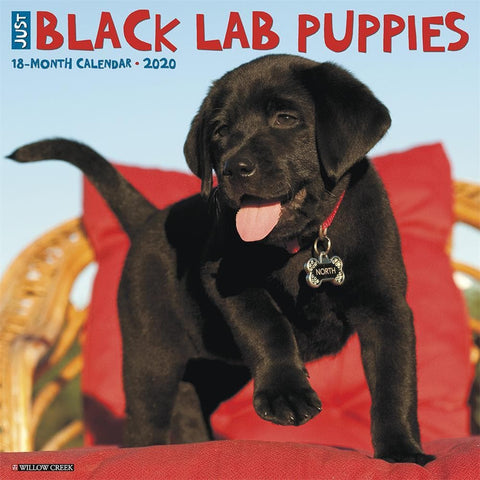 Just Black Lab Puppies 2020 Wall Calendar Front Cover