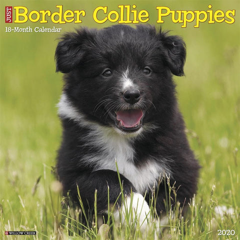 Just Border Collie Puppies 2020 Wall Calendar Front Cover