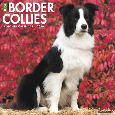 Just Border Collies 2020 Wall Calendar Front Cover
