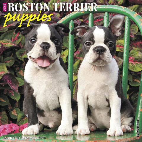Just Boston Terrier Puppies 2020 Wall Calendar Front Cover