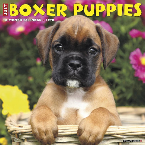 Just Boxer Puppies 2020 Wall Calendar Front Cover