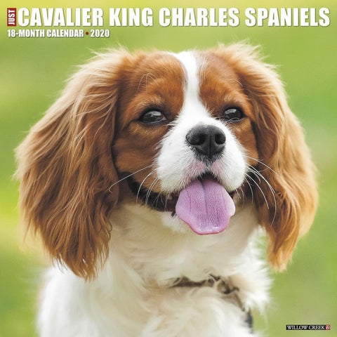 Cavalier King Charles Spaniels Just 2020 Wall Calendar Front Cover