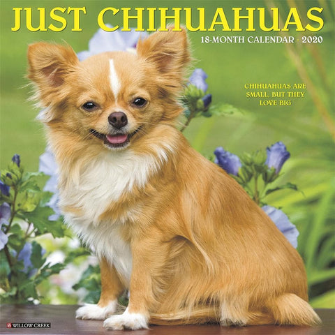 Just Chihuahuas 2020 Wall Calendar Front Cover