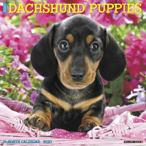 Just Dachshund Puppies Wall Calendar Front Cover
