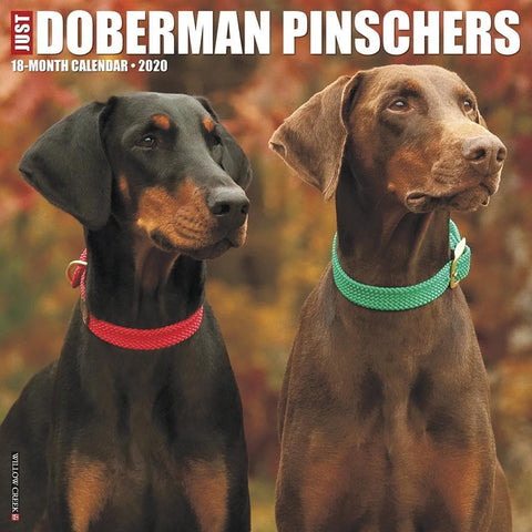 Dobermans Just 2020 Wall Calendar Front Cover