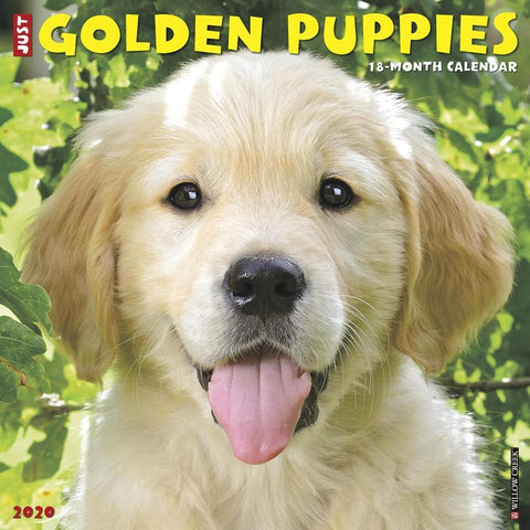 Just Golden Puppies 2020 Wall Calendar Front Cover