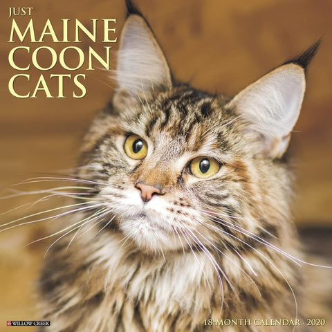 Maine Coon Cats Just 2020 Wall Calendar Front Cover
