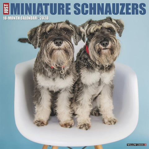 Just Miniature Schnauzers 2020 Wall Calendar Front Cover