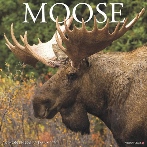 Moose 2020 Wall Calendar Front Cover