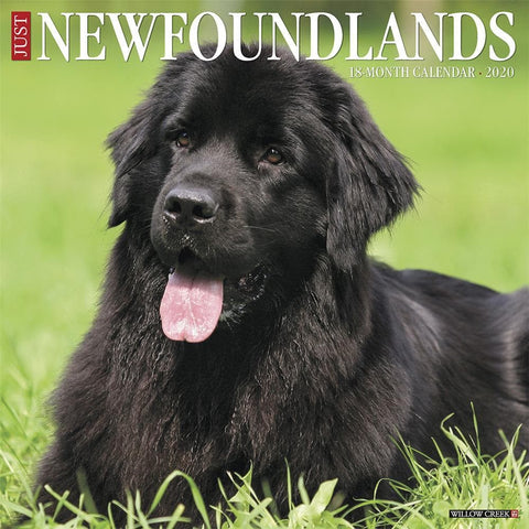 Newfoundlands Just 2020 Wall Calendar Front Cover