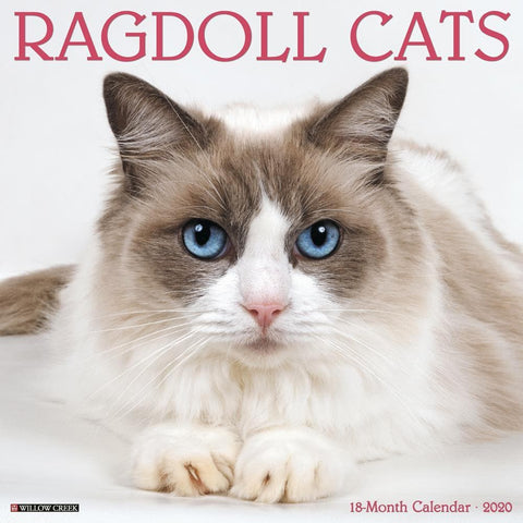 Ragdoll Cats 2020 Wall Calendar Front Cover
