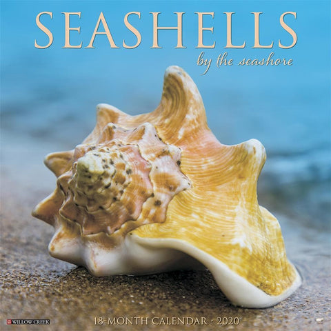 Sea Shells 2020 Wall Calendar Front Cover