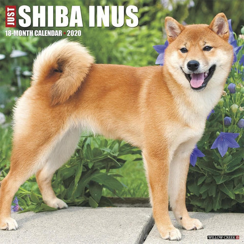 Just Shiba Inus 2020 Wall Calendar Front Cover