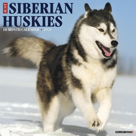 Just Siberian Huskies 2020 Wall Calendar Front Cover