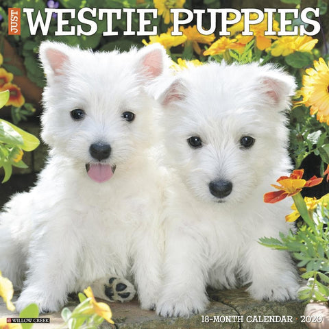 Just Westie Puppies 2020 Wall Calendar Front Cover