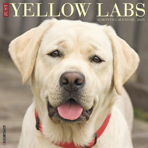 Lab Yellow Just 2020 Wall Calendar Front Cover