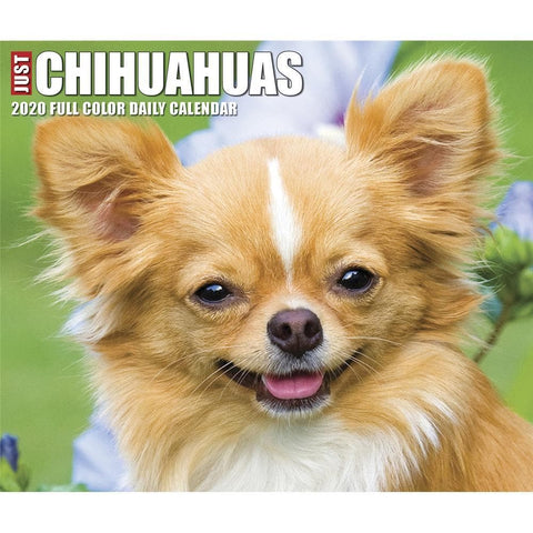 Chihuahuas 2020 Box Calendar Front Cover