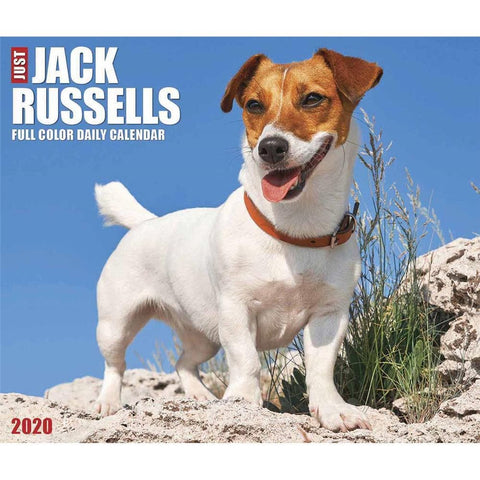 Jack Russells 2020 Box Calendar Front Cover
