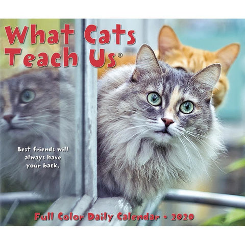 What Cats Teach Us 2020 Box Calendar Front Cover