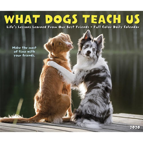 What Dogs Teach Us 2020 Box Calendar Front Cover