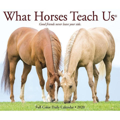 What Horses Teach Us 2020 Box Calendar Front Cover