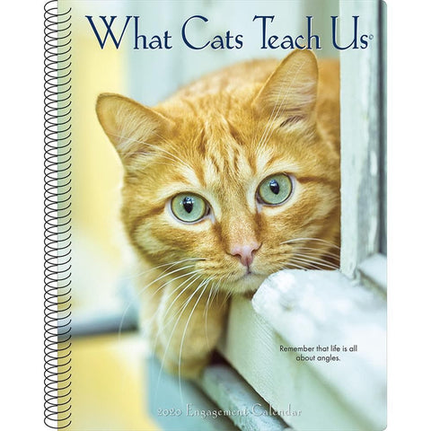 What Cats Teach Us 2020 Engagement Calendar Front Cover