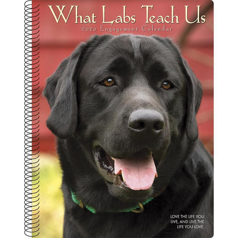 What Labs Teach Us 2020 Engagement Calendar Front Cover