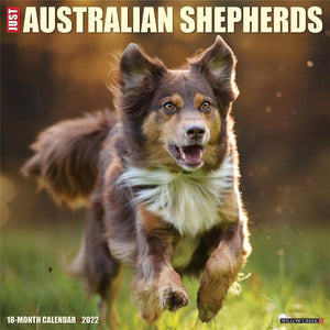 Just Australian Shepherds 2022 Wall Calendar - Online Exclusive Product Image