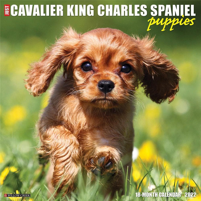 Just Cavalier King Charles Spaniel Puppies 2022 Wall Calendar (Pre-Order)