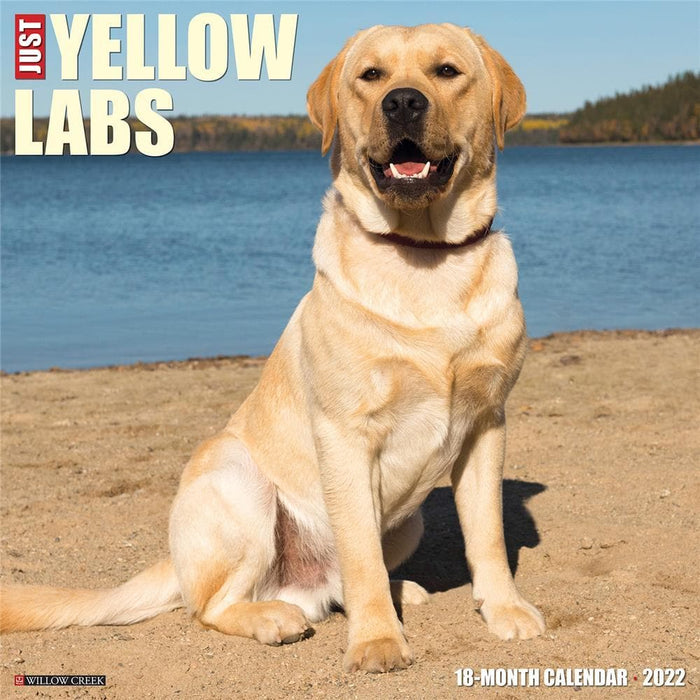 Just Yellow Labs 2022 Wall Calendar (Pre-Order)