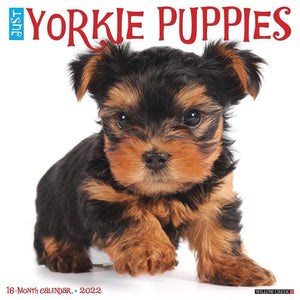 Just Yorkie Puppies 2022 Wall Calendar Product Image