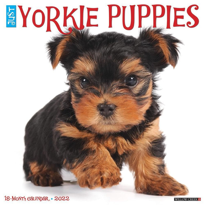 Just Yorkie Puppies 2022 Wall Calendar (Pre-Order)