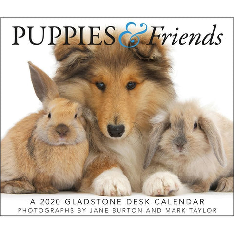 Puppies and Friends 2020 Box Calendar