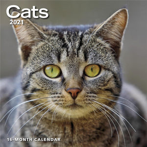 Cats 2021 Wall Calendar Front Cover Image