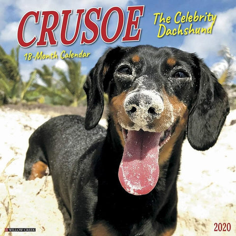 Crusoe the Celebrity Dachshund 2020 Wall Calendar