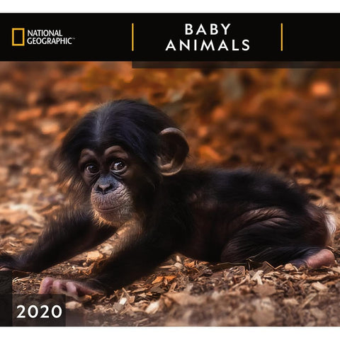 Baby Animals NG 2020 Wall Calendar Front Cover