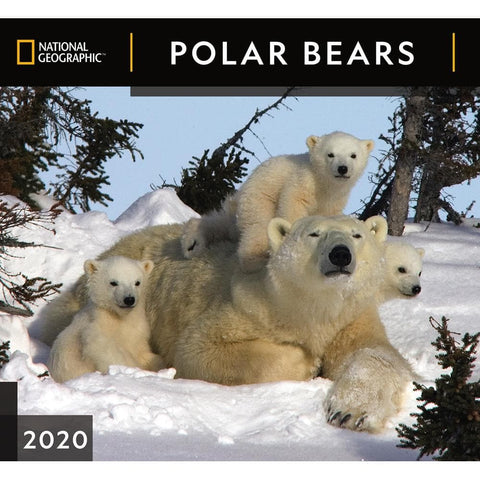 Polar Bears NG 2020 Wall Calendar Front Cover