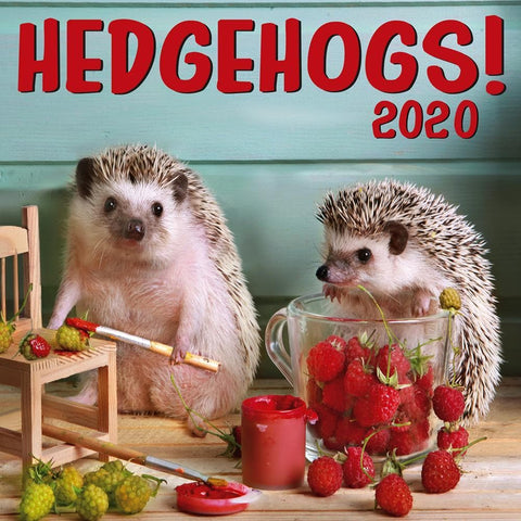 Hedgehogs 2020 Wall Calendar Front Cover
