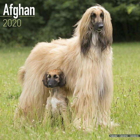 Afghan 2020 Wall Calendar Front Cover